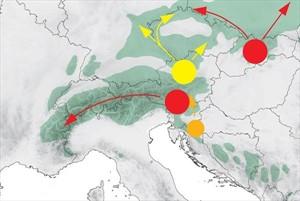 Sirenie drevin v Europe